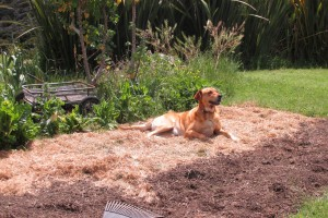 Nell supervising the gardening.