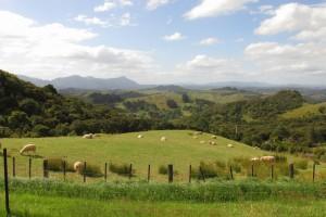 The main sheep paddock.