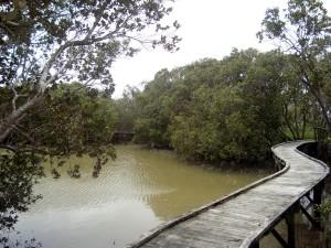 Mangrove walkway in Rawene