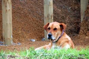Nell the farm dog