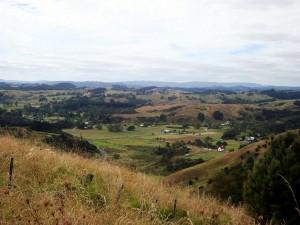 View down over Whirinaki